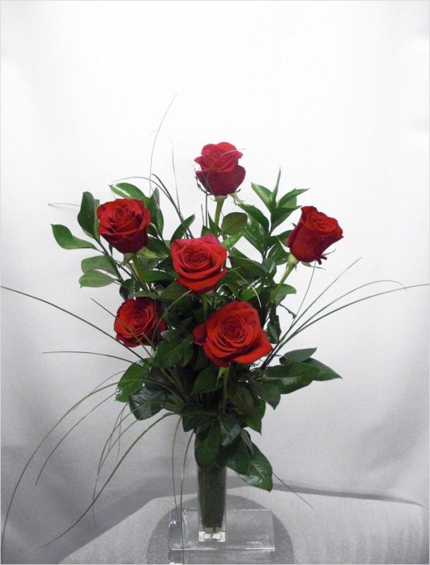 6 Rosas Rojas Tallo largo