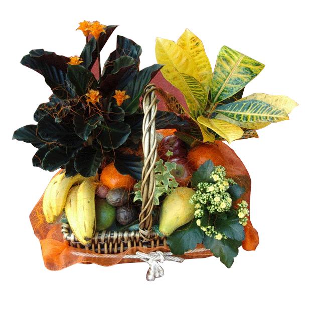 Cesta de Fruta y Plantas