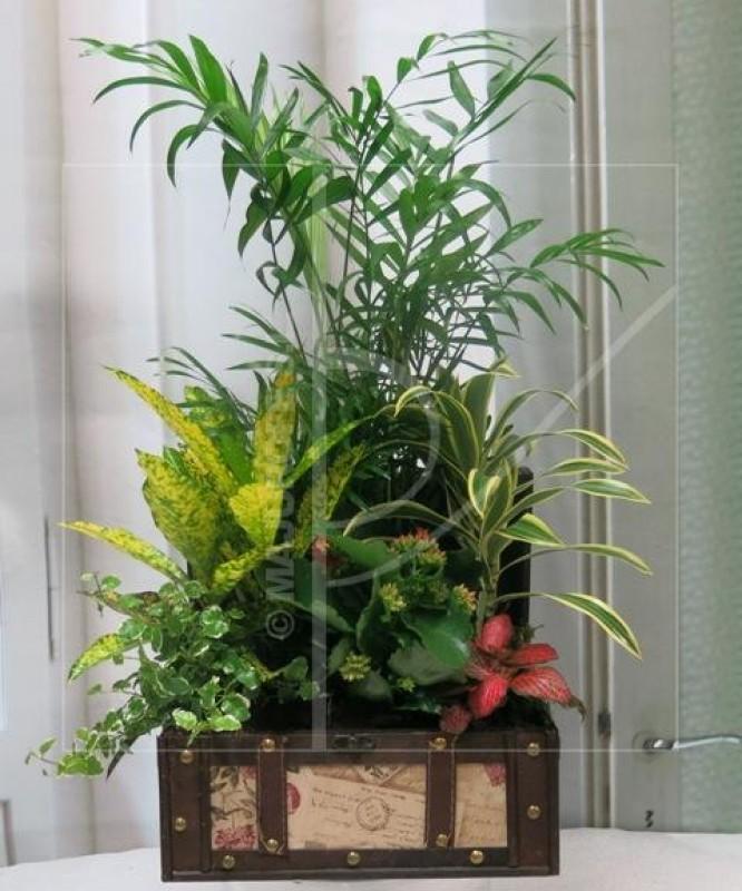 Cofre con Plantas Naturales