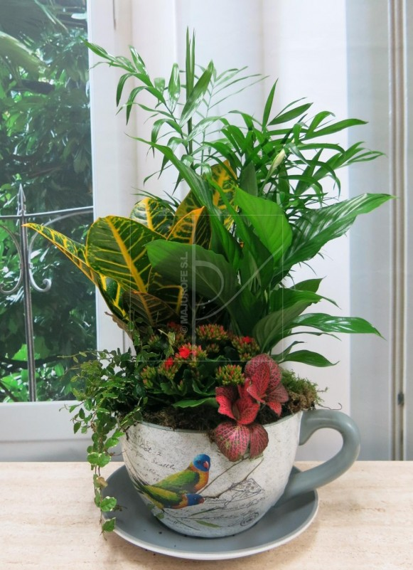 Grupo de plantas en Taza Grande