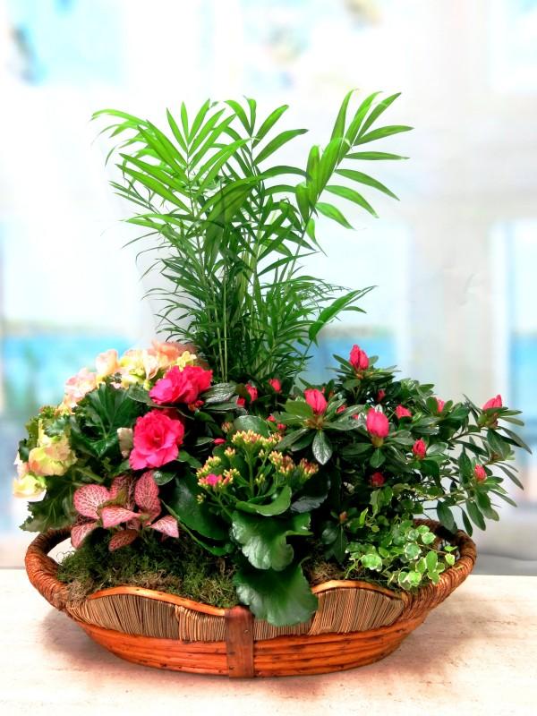 Panera de plantas con flor