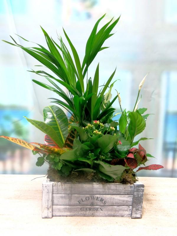 Caja con plantas naturales Flower & Garden
