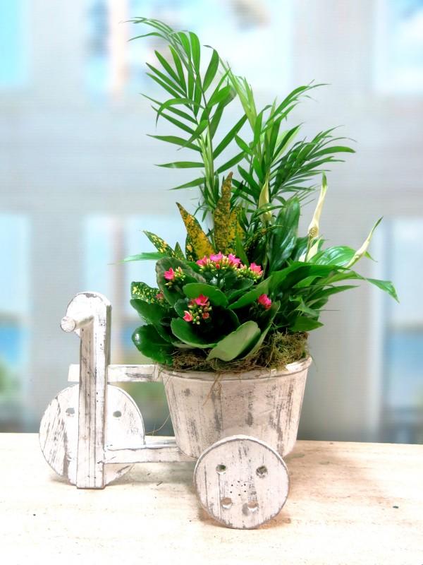 El Triciclo de las Plantas