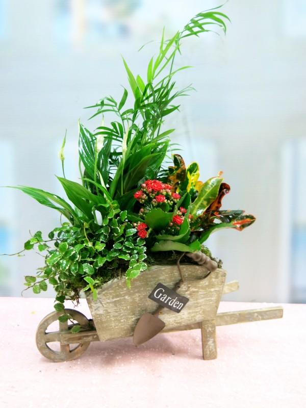 Carretilla cargada  de Plantas