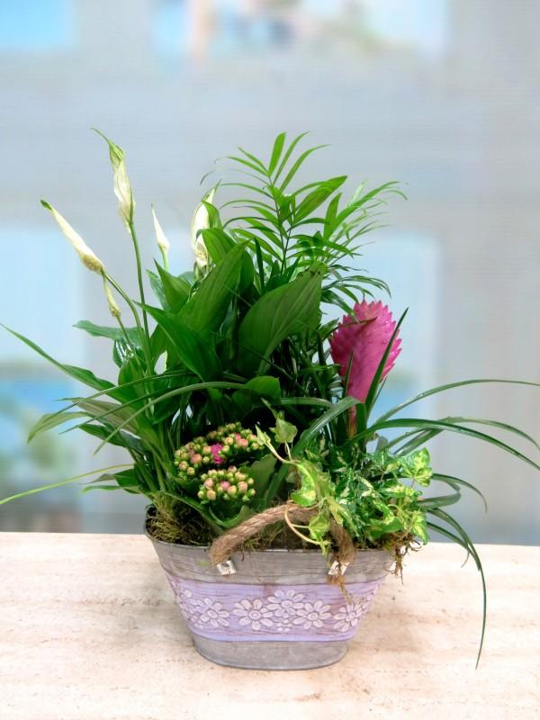 Plantas en la cesta de la Abuela