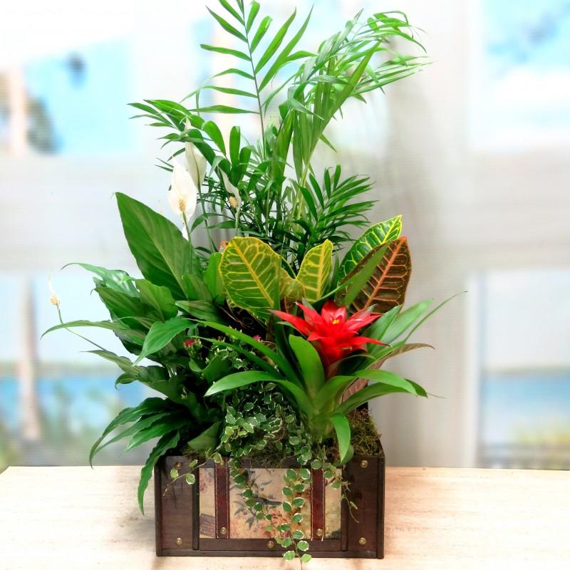 Cofre Pirata con plantas naturales.