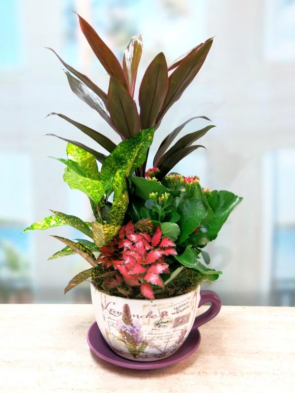 Conjunto de Plantas en taza de cerámica
