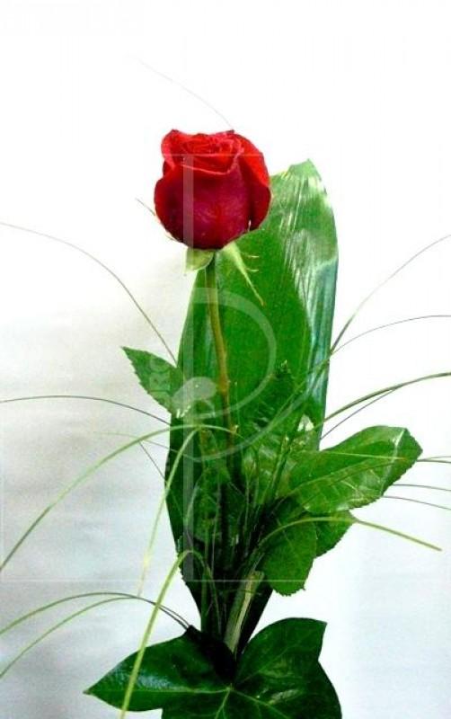 1 Rosa Roja