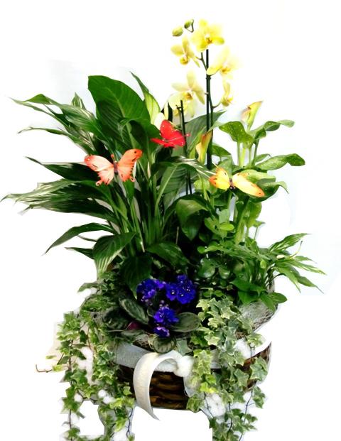 Composición de plantas con Orquidea - Foto principal