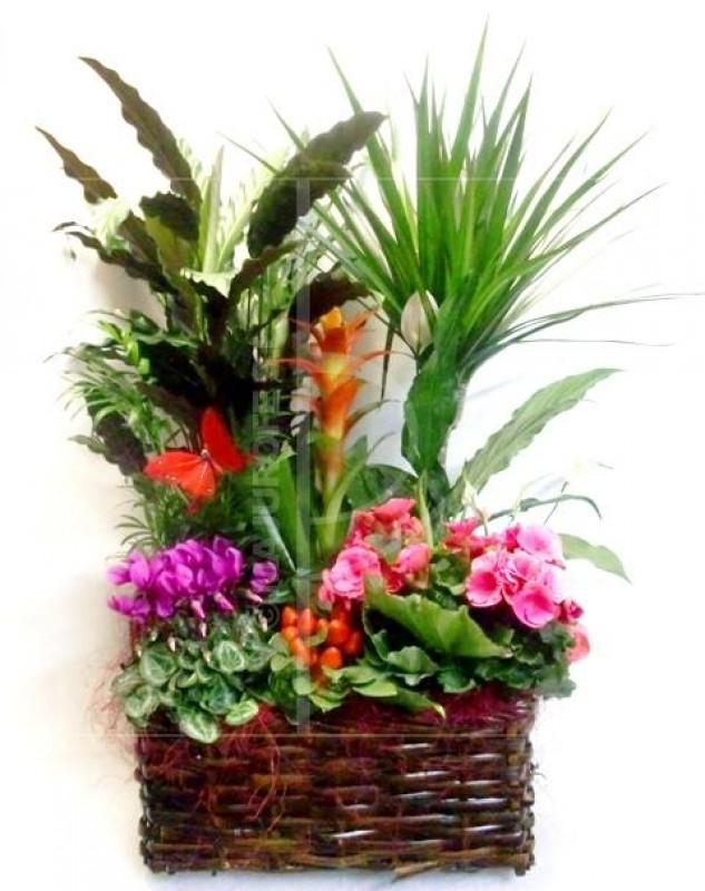 Cesta de plantas variadas con flor