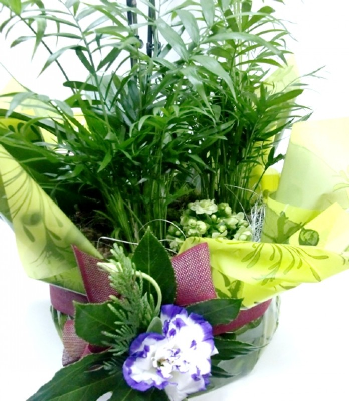 Composición de Orquídeas Phalenopsis - Foto 2