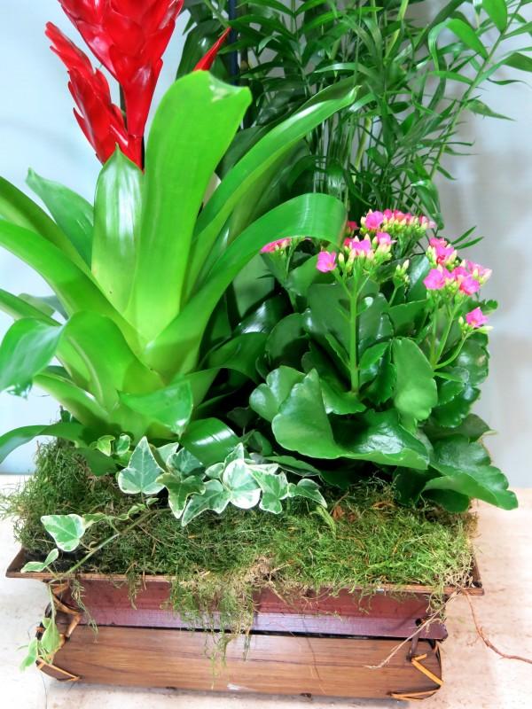 Centro de plantas con Orquídea - Foto 2