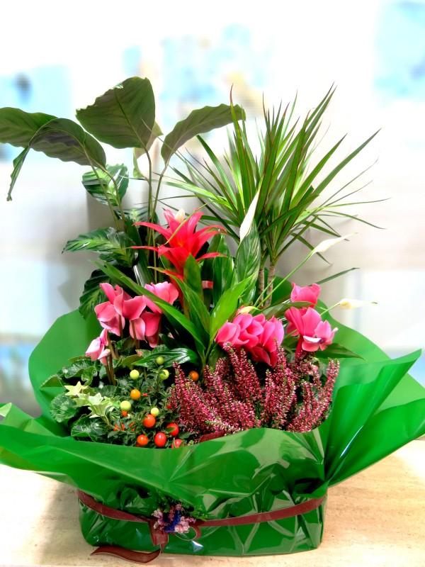 Cesta de plantas variadas con flor - Foto principal