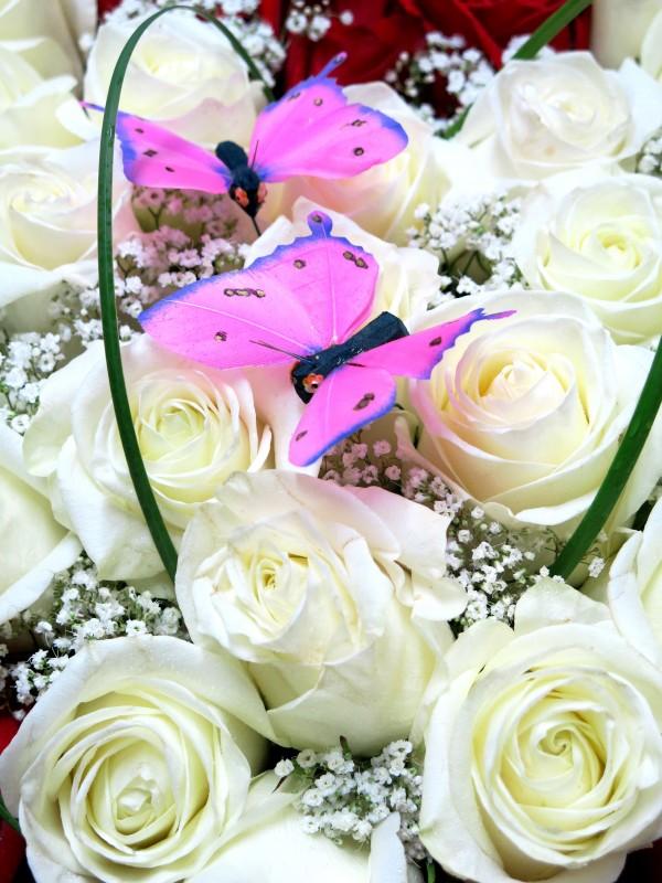 EL Corazón de 70 Rosas. Regálaselo - Foto 3