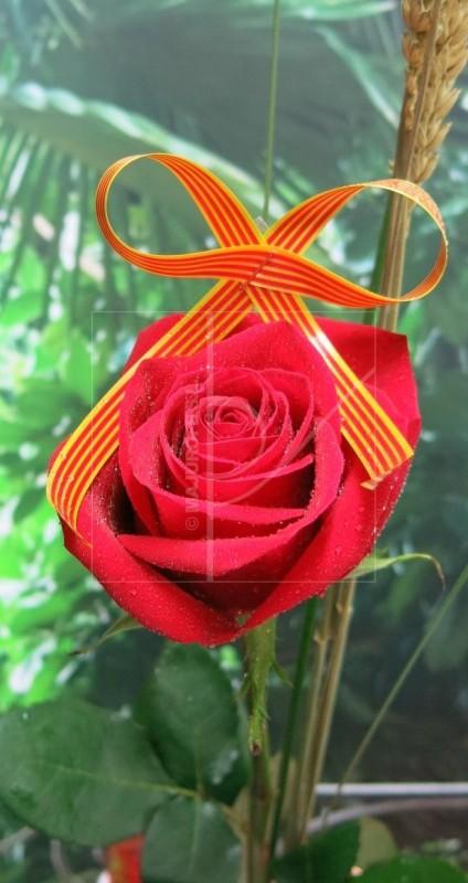 Día de la rosa. Tu pones el libro y nosotros la Rosa - Foto 2
