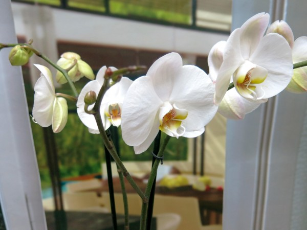 Orquídea Phalenopsis con Cerámica - Foto 4