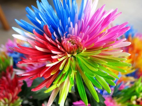 Anastasia Multicolor 6 tallos - Foto 4