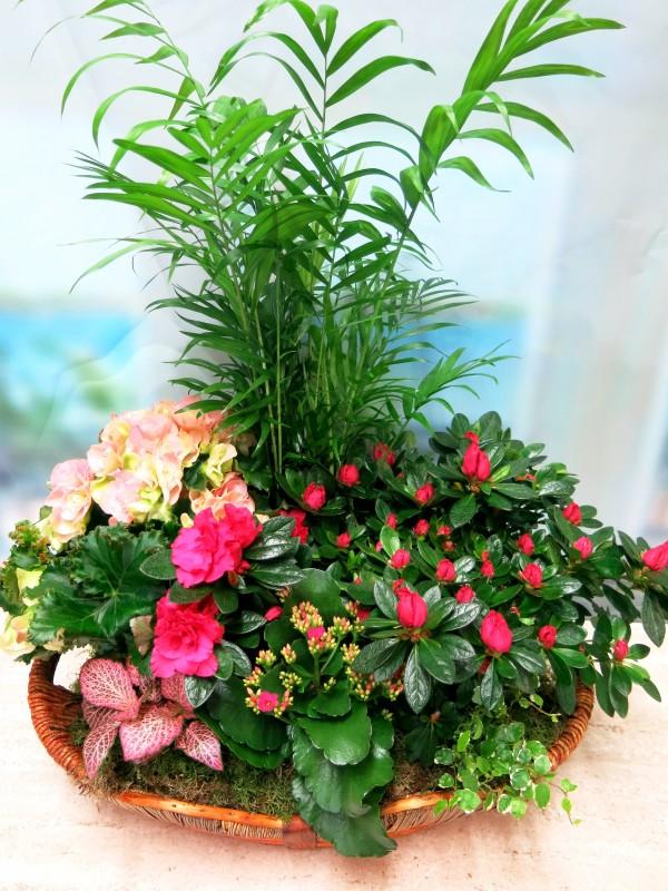 Panera de plantas con flor - Foto 2