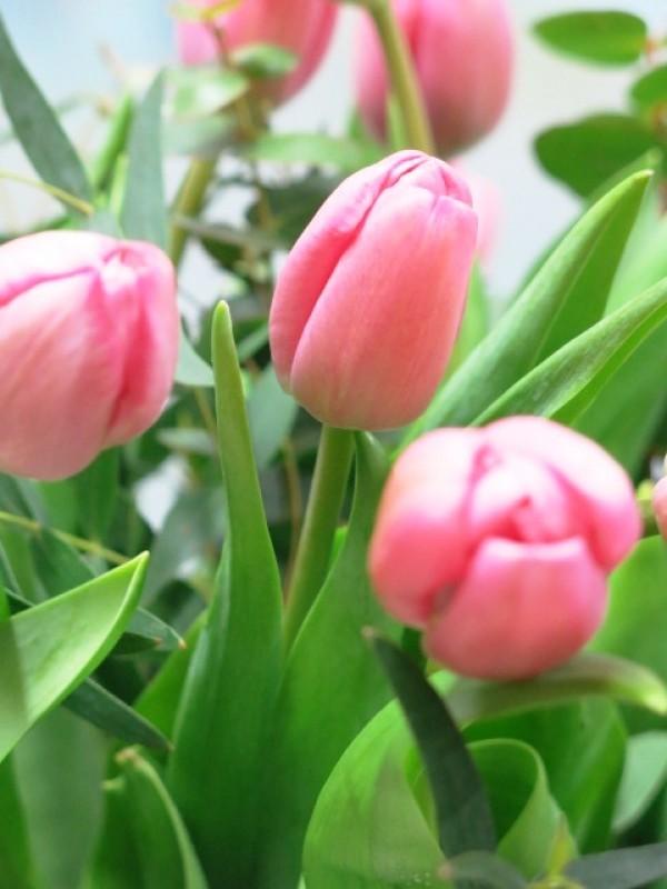 20 Tulipanes en Jarrón de cristal - Foto 4