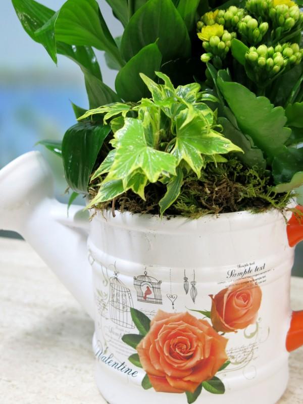 Plantas en Regadera de Cerámica - Foto 3