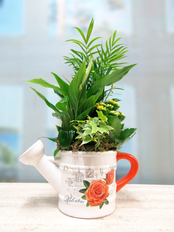 Plantas en Regadera de Cerámica