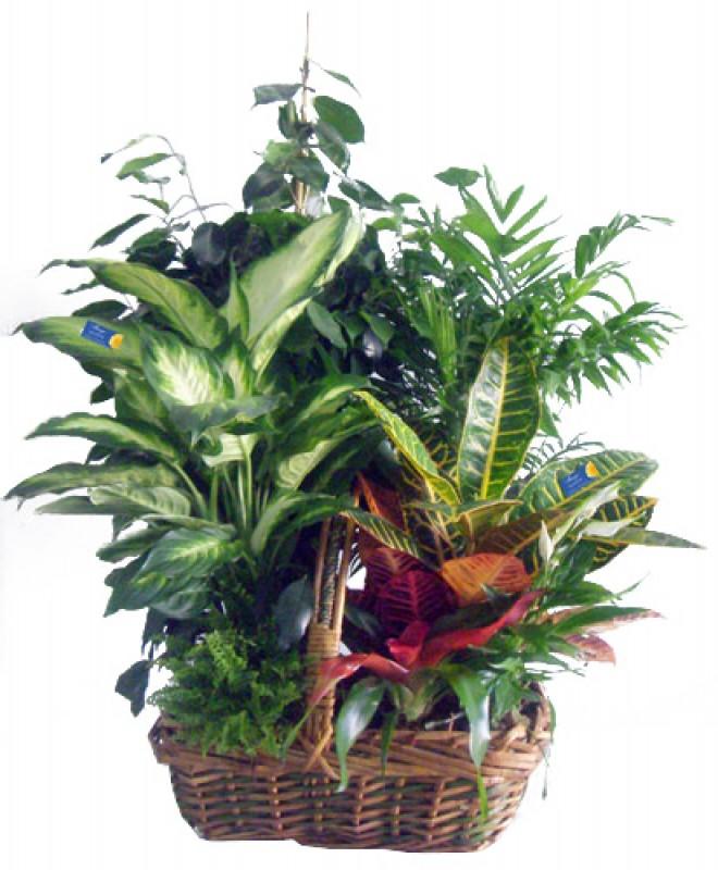 Composición de plantas. - Foto principal