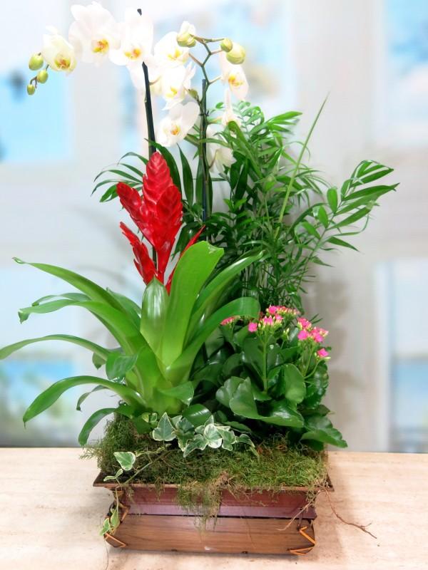 Centro de plantas con Orquídea