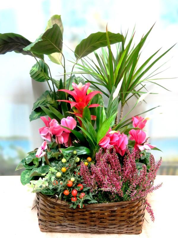 Cesta de plantas variadas con flor - Foto 2