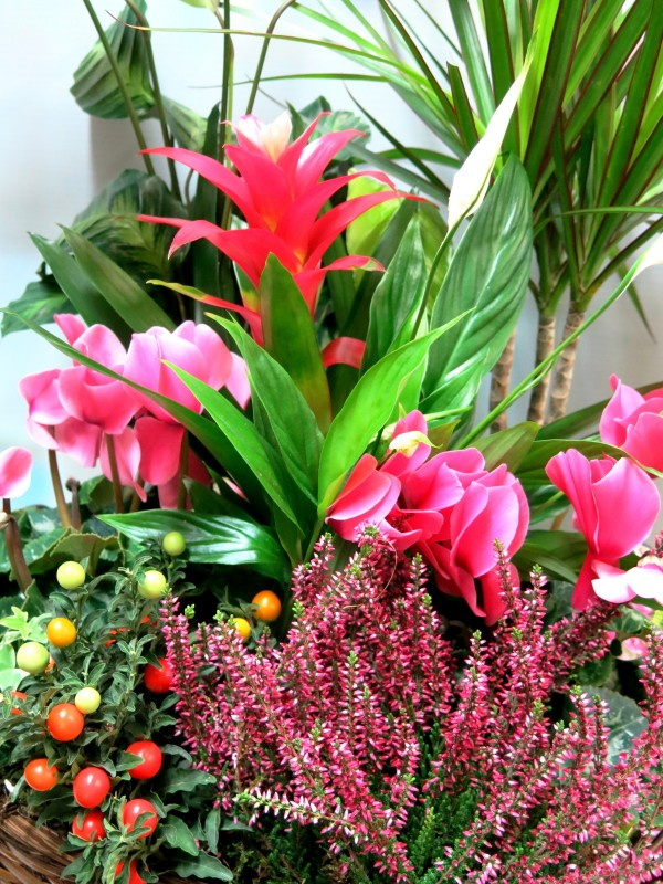 Cesta de plantas variadas con flor - Foto 3
