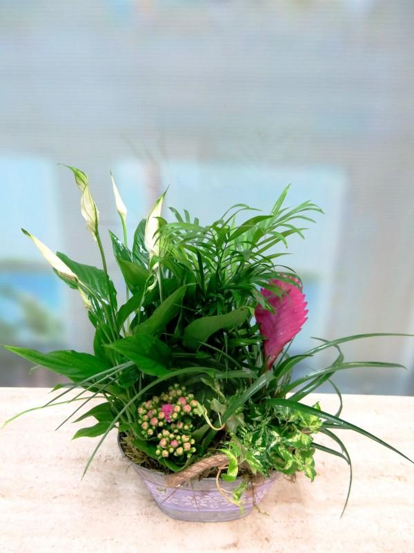Plantas en la cesta de la Abuela - Foto 2