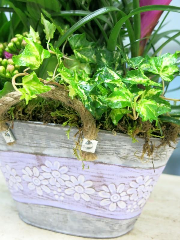 Plantas en la cesta de la Abuela - Foto 3