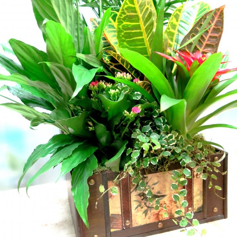 Cofre Pirata con plantas naturales. Grande - Foto 2