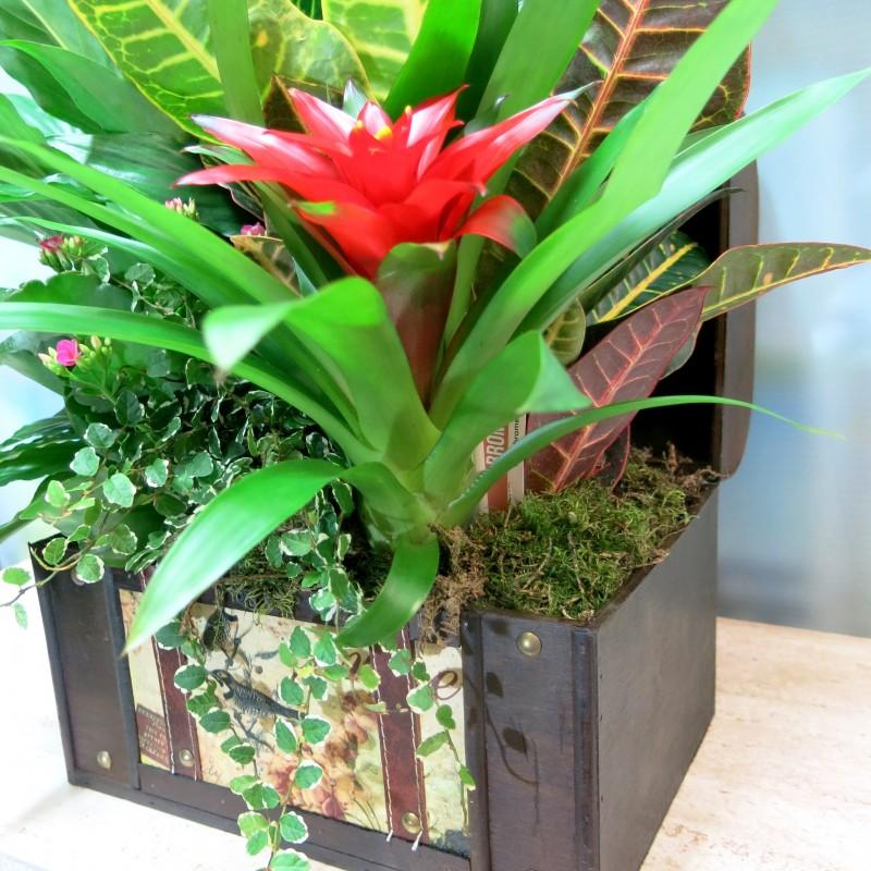 Cofre Pirata con plantas naturales. Grande - Foto 3