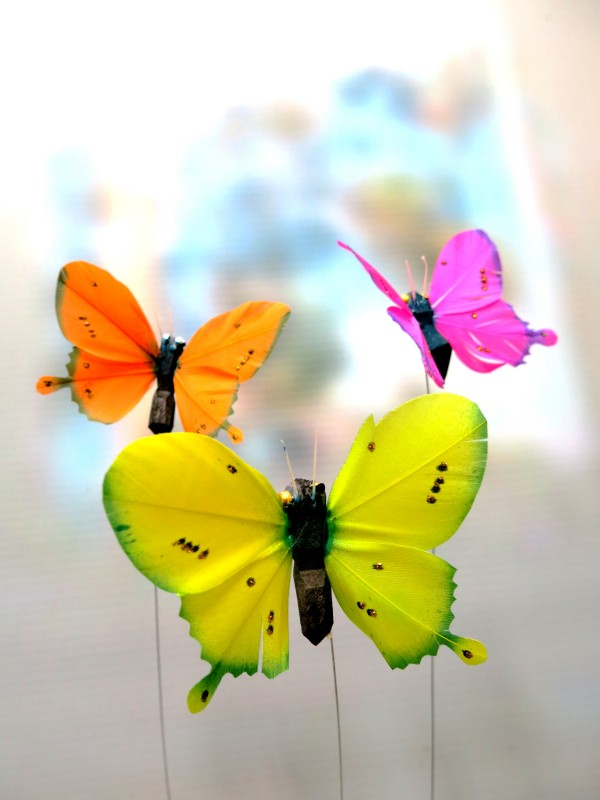 Butterflies - Foto principal
