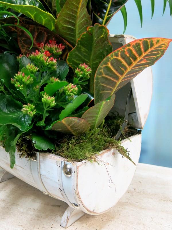 Centro de plantas en baúl blanco - Foto 2