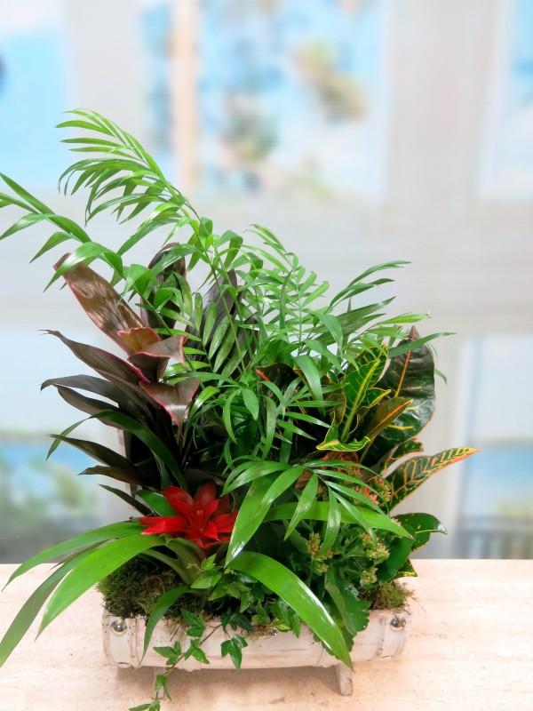 Centro de plantas en baúl blanco - Foto 3