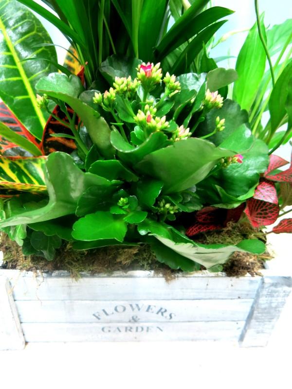 Caja con plantas naturales Flower & Garden - Foto 3