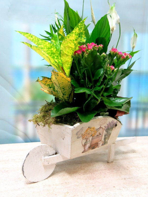 Carretilla cargada  de Plantas - Foto 3