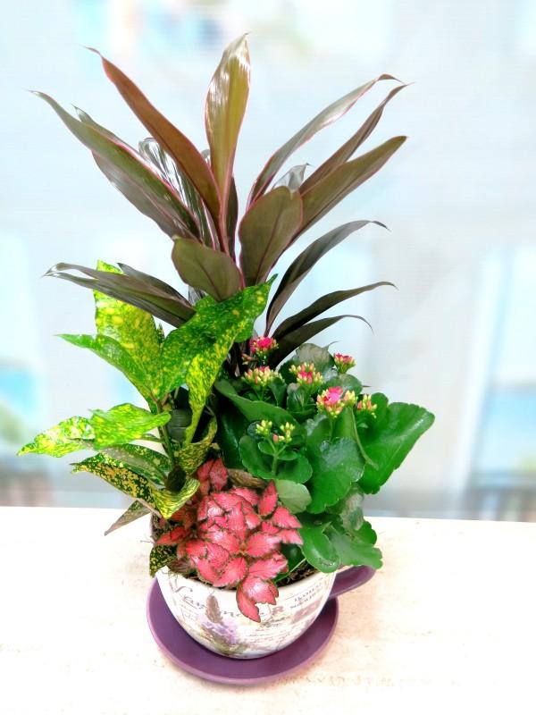 Conjunto de Plantas en taza de cerámica - Foto 2