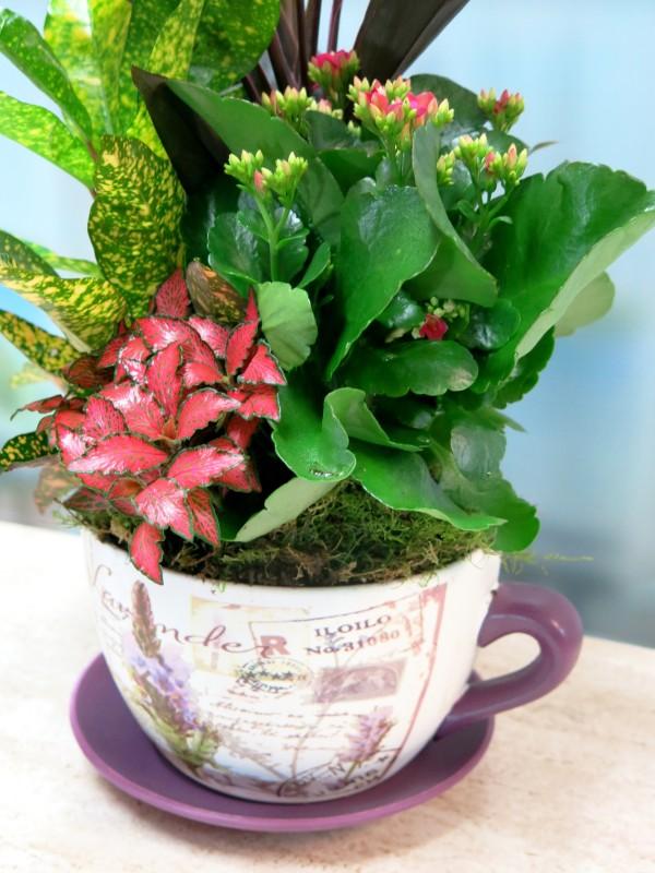 Conjunto de Plantas en taza de cerámica - Foto 3