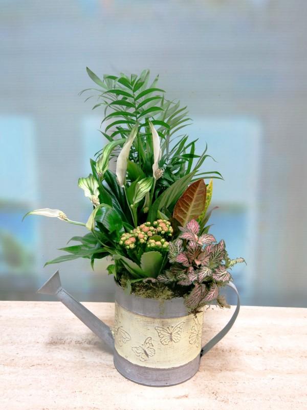 Plantas naturales en Regadera de metal - Foto 4
