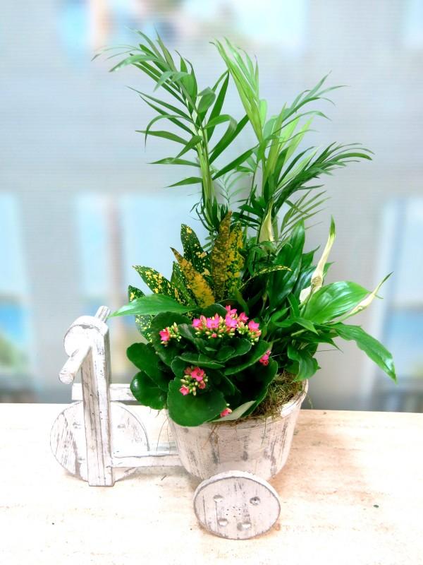 El Triciclo de las Plantas - Foto 2