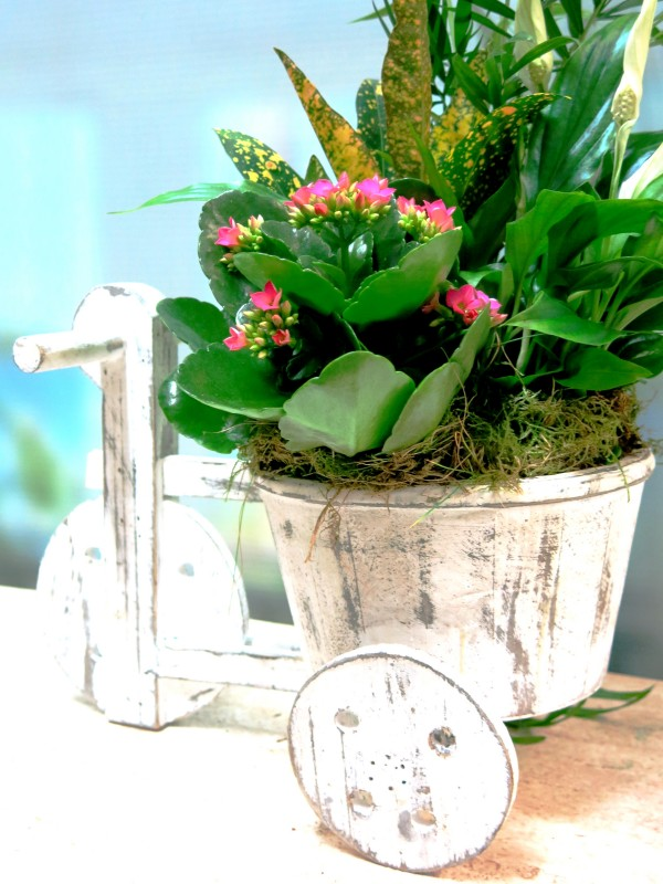 El Triciclo de las Plantas - Foto 3