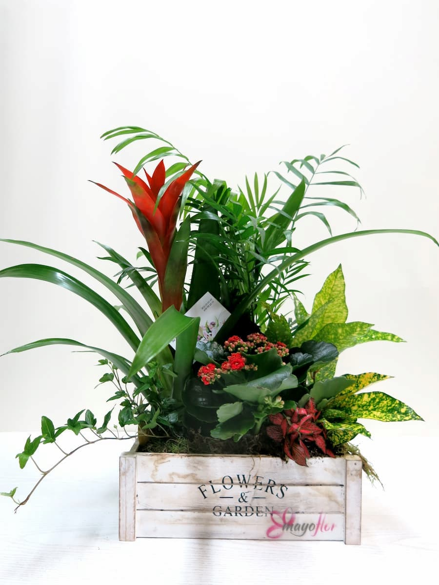Box with natural plants Flower & Garden - Foto principal
