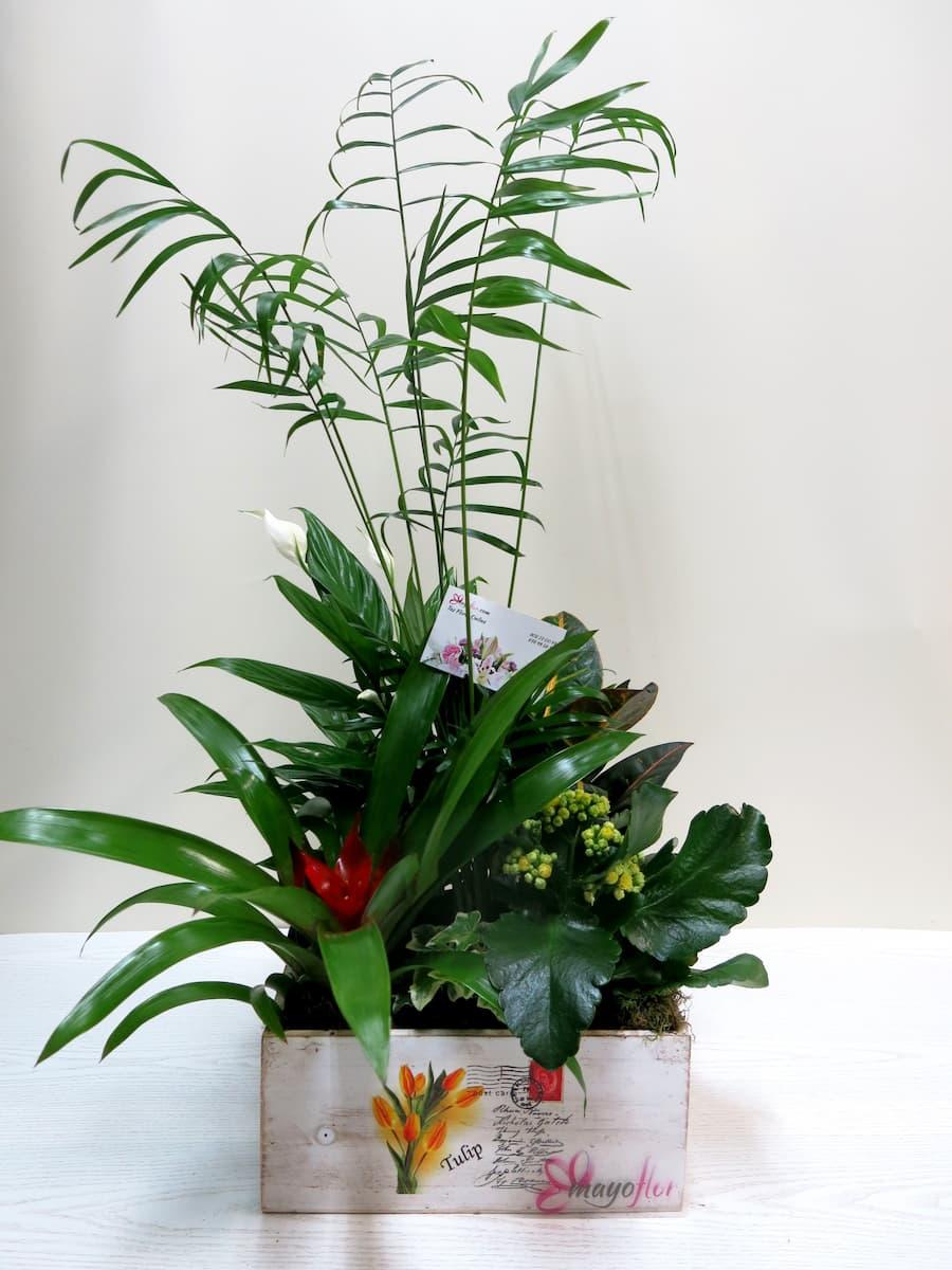 Plants Center in Box - Foto 2