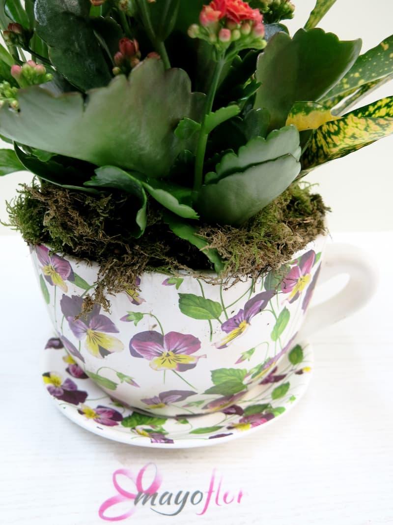 Conjunto de Plantas en taza de cerámica - Foto 4