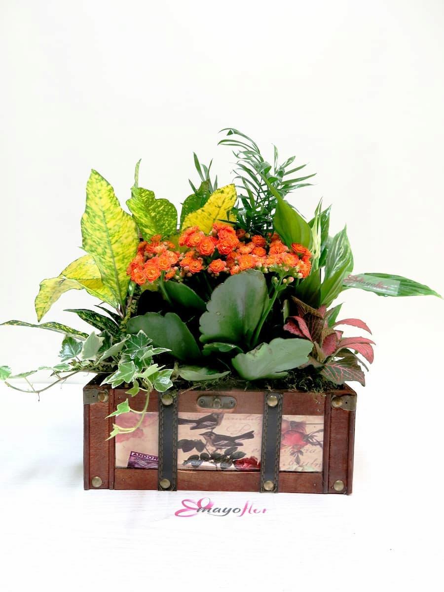 Cofre con Plantas Naturales - Foto 2