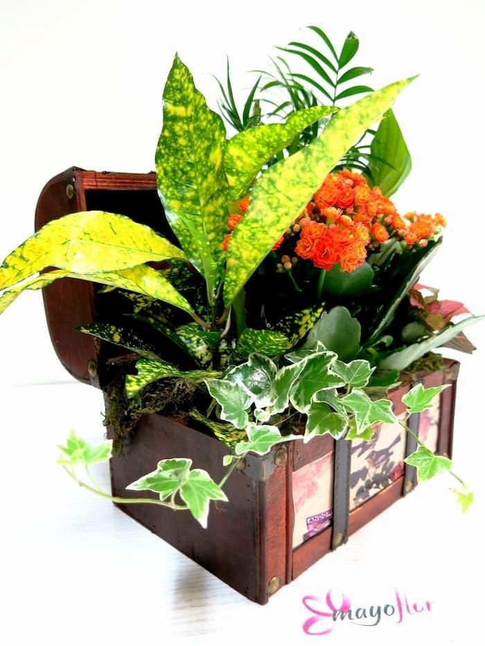 Cofre con Plantas Naturales - Foto 3