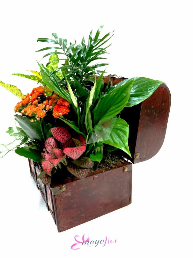 Cofre con Plantas Naturales - Foto 4