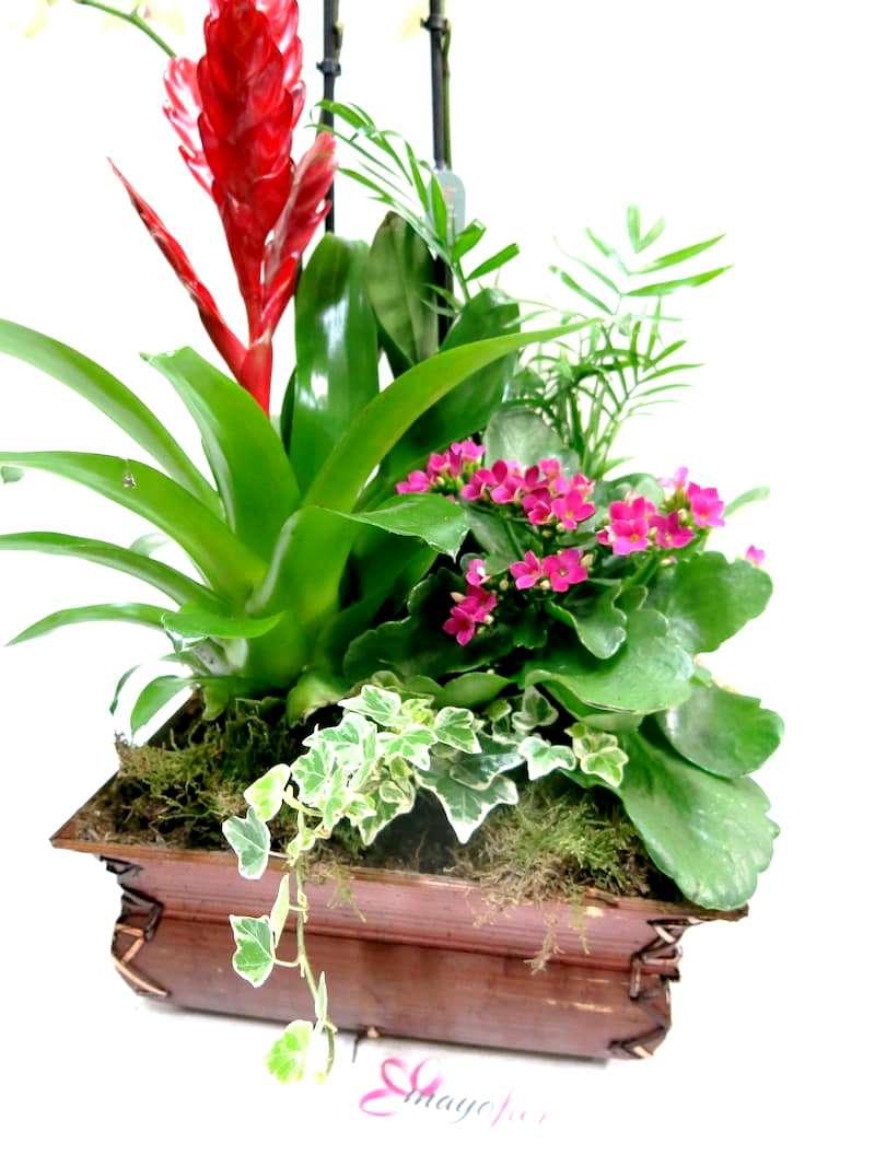 Centro de plantas con Orquídea - Foto 5